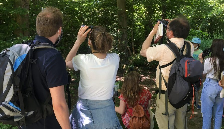 Balades autour des oiseaux dans le Bois Hue © NMA